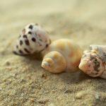 Offerte Centri benessere sul Mare