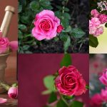 Trattamenti benessere all'essenza di rosa