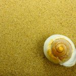 Mare e SPA: il massaggio con le conchiglie