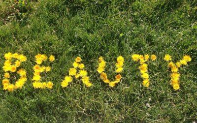 Trattamenti benessere green da provare in SPA